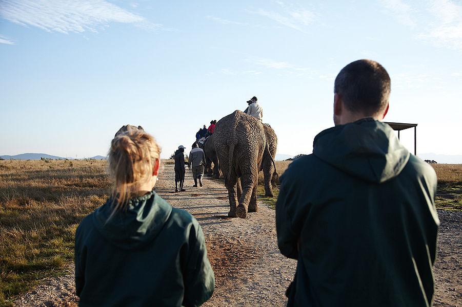 Projeto Garden Route Elephant Park África Do Sul