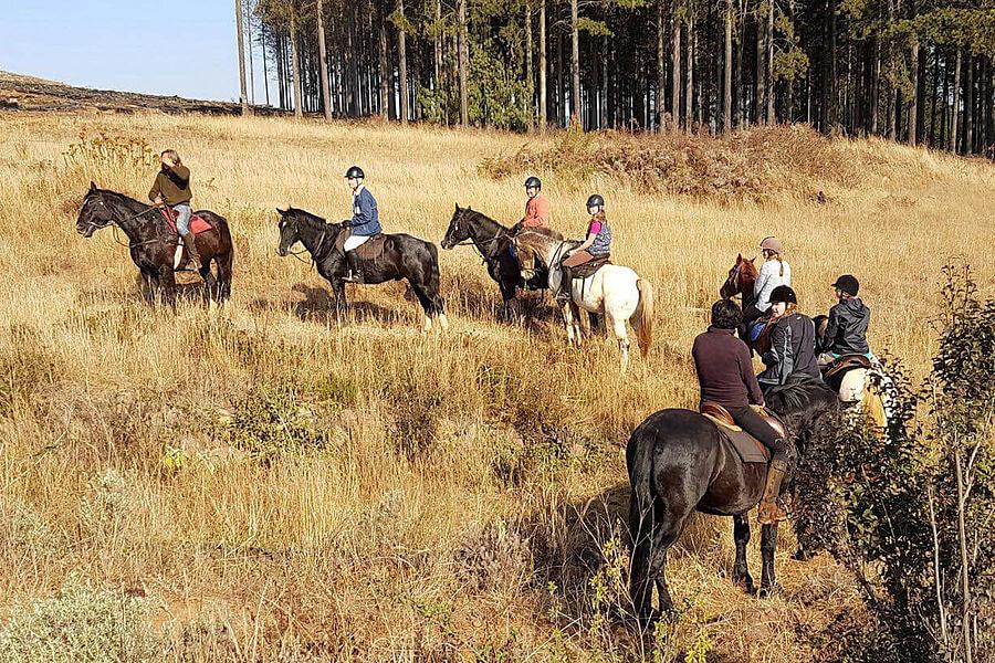 Destaque Do Projeto VoluntÁrio Drakensberg Horse Trails