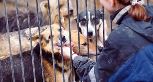 Projeto Voluntário Na África Do Sul Domestic Animal Shelter Roda Mundo