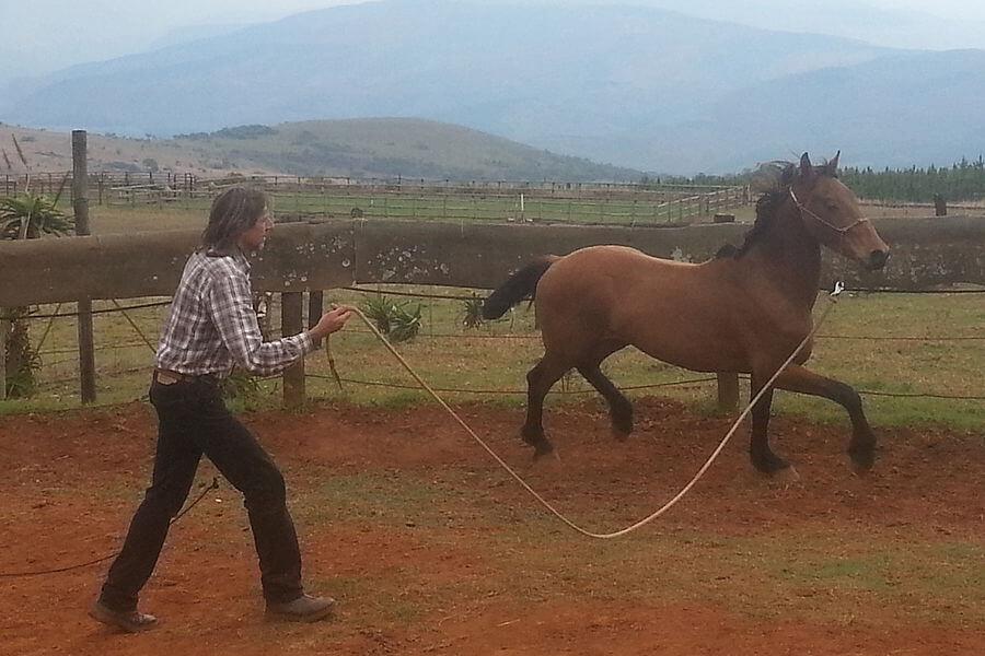 Treinamento Com Cavalos