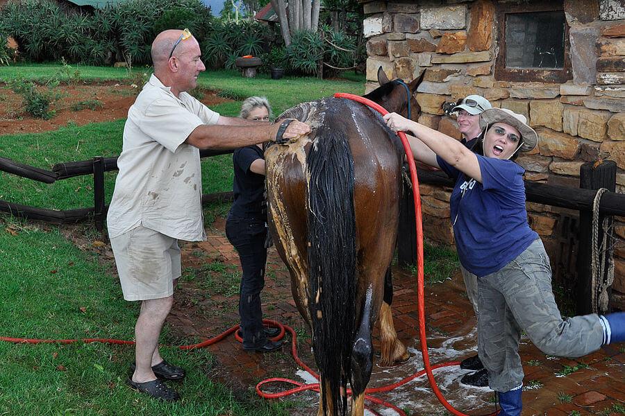 Projeto Voluntario Com Cavalos